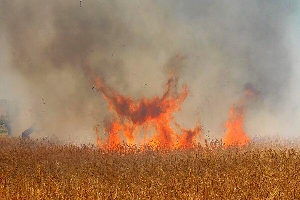 خسارت ۱۲۰میلیونتومانی به کشاورزان در آتشسوزی مزارع سرپل ذهاب