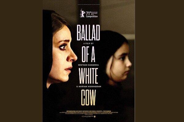 عرضه جهانی حق پخش «قصیده گاو سفید»/ ایده فیلم چگونه شکل گرفت؟