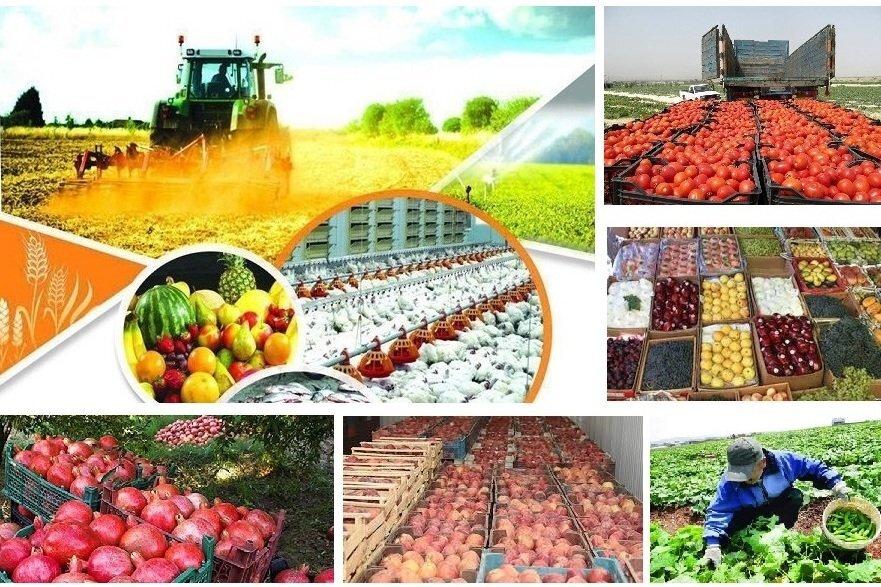 قانون انتزاع، از بازوهای اصلی اجرای طرح تقویت امنیت غذایی است