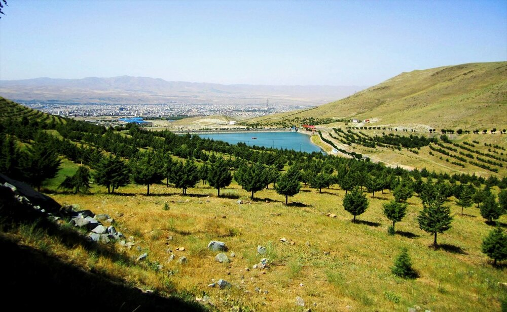 ۱۷۵۰ هکتار جنگل کاری در استان مرکزی انجام شده است